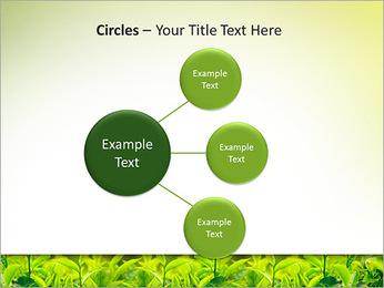 Plantes en plein soleil Modèles des présentations  PowerPoint - Diapositives 59