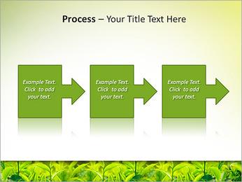 Plantes en plein soleil Modèles des présentations  PowerPoint - Diapositives 68