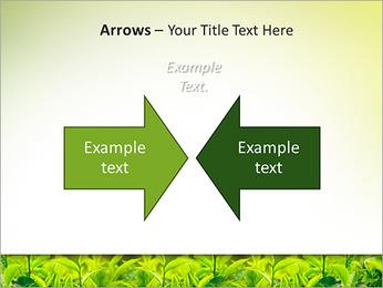 Plantes en plein soleil Modèles des présentations  PowerPoint - Diapositives 70