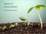 Plant In Soil PowerPoint Templates