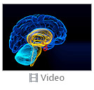 Brain Video