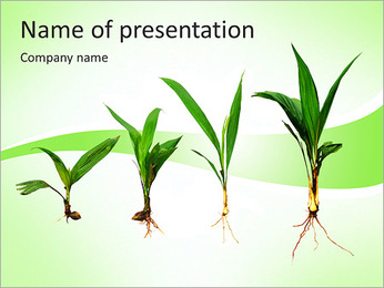 Growth Of Plant PowerPoint Template