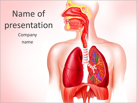 Human lungs powerpoint template backgrounds id 0000005282 human lungs powerpoint template toneelgroepblik Choice Image