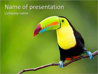 Toucan Bird PowerPoint Template - Slide 1