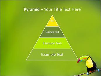 Toucan Bird PowerPoint Template - Slide 10