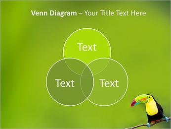 Toucan Bird PowerPoint Template - Slide 13