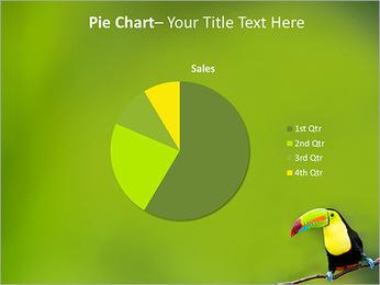 Toucan Bird PowerPoint Template - Slide 16