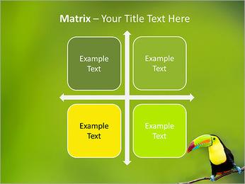 Toucan Bird PowerPoint Template - Slide 17