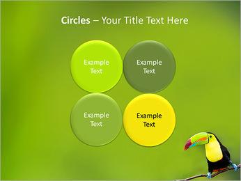 Toucan Bird PowerPoint Template - Slide 18