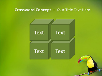 Toucan Bird PowerPoint Template - Slide 19