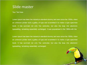 Toucan Bird PowerPoint Template - Slide 2