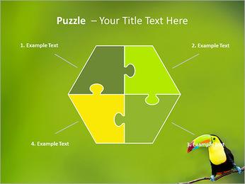 Toucan Bird PowerPoint Template - Slide 20