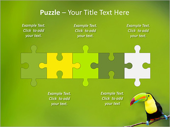 Toucan Bird PowerPoint Template - Slide 21