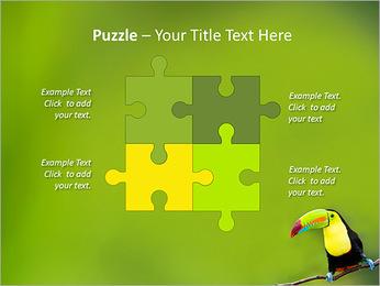 Toucan Bird PowerPoint Template - Slide 23