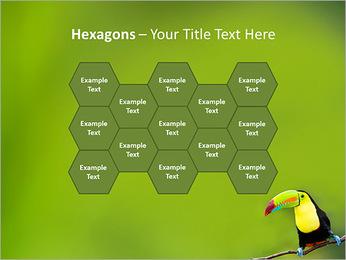 Toucan Bird PowerPoint Template - Slide 24
