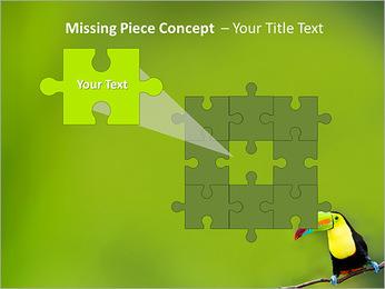 Toucan Bird PowerPoint Template - Slide 25