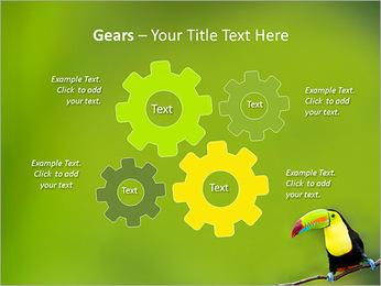 Toucan Bird PowerPoint Template - Slide 27