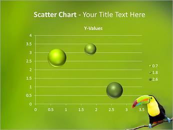 Toucan Bird PowerPoint Template - Slide 29