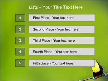 Toucan Bird PowerPoint Template - Slide 3