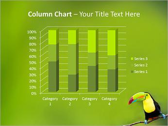 Toucan Bird PowerPoint Template - Slide 30