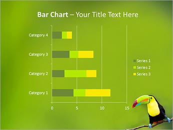 Toucan Bird PowerPoint Template - Slide 32