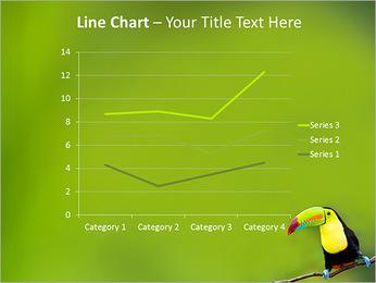 Toucan Bird PowerPoint Template - Slide 34