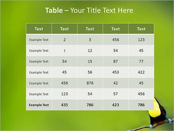 Toucan Bird PowerPoint Template - Slide 35