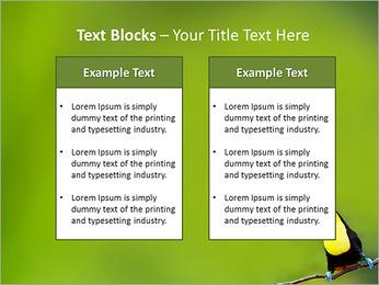 Toucan Bird PowerPoint Template - Slide 37