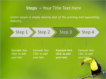 Toucan Bird PowerPoint Template - Slide 4