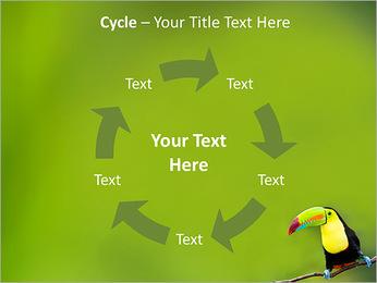 Toucan Bird PowerPoint Template - Slide 42