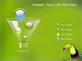 Toucan Bird PowerPoint Template - Slide 43