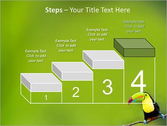 Toucan Bird PowerPoint Template - Slide 44