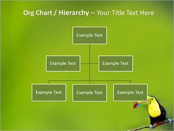 Toucan Bird PowerPoint Template - Slide 46