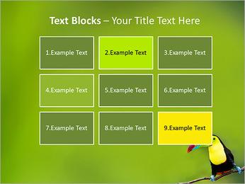 Toucan Bird PowerPoint Template - Slide 48