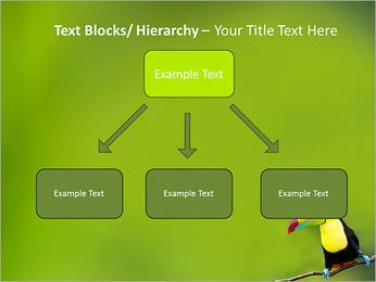 Toucan Bird PowerPoint Template - Slide 49