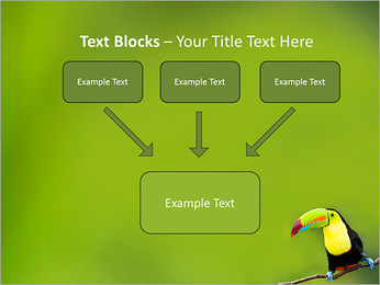 Toucan Bird PowerPoint Template - Slide 50