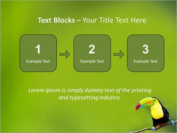 Toucan Bird PowerPoint Template - Slide 51