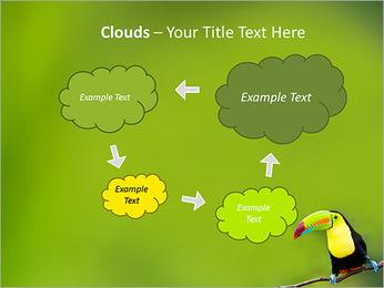 Toucan Bird PowerPoint Template - Slide 52