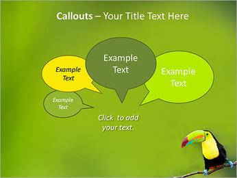 Toucan Bird PowerPoint Template - Slide 53