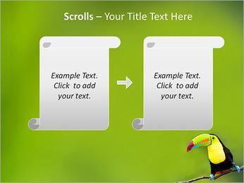 Toucan Bird PowerPoint Template - Slide 54