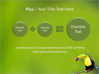 Toucan Bird PowerPoint Template - Slide 55