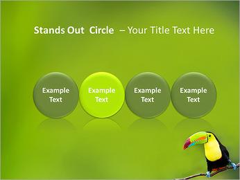 Toucan Bird PowerPoint Template - Slide 56