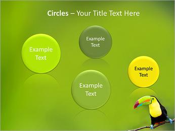 Toucan Bird PowerPoint Template - Slide 57