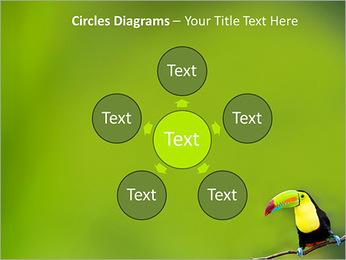 Toucan Bird PowerPoint Template - Slide 58