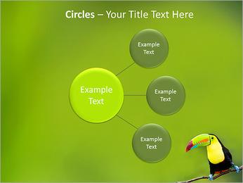 Toucan Bird PowerPoint Template - Slide 59