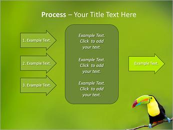 Toucan Bird PowerPoint Template - Slide 65