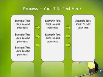 Toucan Bird PowerPoint Template - Slide 66