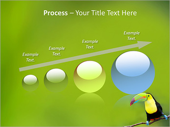 Toucan Bird PowerPoint Template - Slide 67