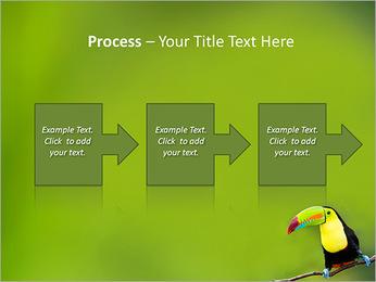 Toucan Bird PowerPoint Template - Slide 68