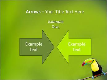 Toucan Bird PowerPoint Template - Slide 70